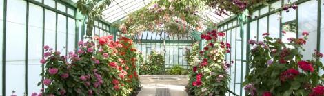 ชื่นชมดอกไม้ ณ เรือนกระจกของพระราชวัง Laeken